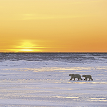 北極スマイル・南極スマイル カレンダー 2020 12月