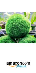 marimo moss ball balls air plants succulent succulents decor house indoor terrarium plant terrariums