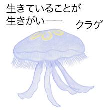 クラゲ画像