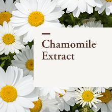 Chamomile Extract