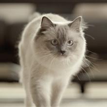 Ultima cuida de tu gato: