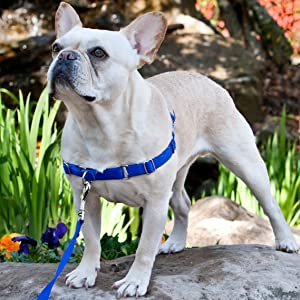 Petsafe, easysport, harness, no pull, pulling, dog, collar, leash