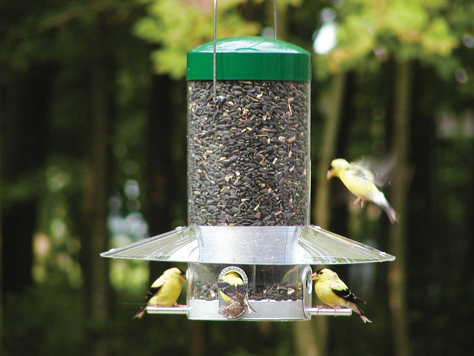 amazon com birds choice 12