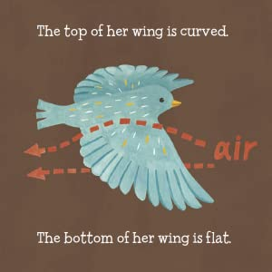 The top of her wing is curved. The bottom of her wing is flat.