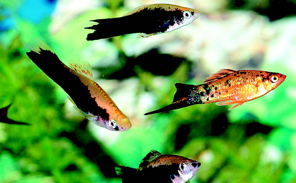 500 Freshwater Aquarium Fish A Visual Reference To The Most Popular Species Jennings Greg 9781770859197 Amazon Com Books