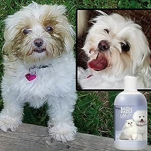 razzle dazzle white pet shampoo, great pyrenees shampoo, white dog shampoo, maltese shampoo, bichon