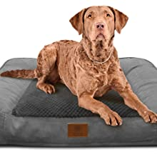 akc, american kennel club, memory foam, orthopedic, big dogs