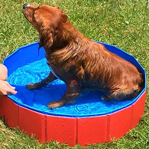 Amazon Com Fuloon Foldable Pvc Pet Swimming Pool
