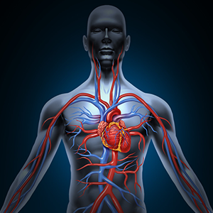 CoQ10, L-Carnitine and Magnesium cellular energy heart muscles muscle mass and recovery fatigue