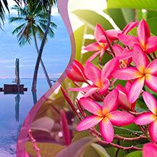 Glade Tropical Blossoms
