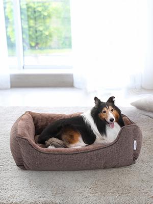 Dos mascotas muy traviesas, Fe y Rea fueron adoptadas en un hogar, SONGMICS, una compañía llena de vida y con montones de cosas divertidas para mascotas.