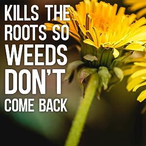 Mata directamente a las raíces.