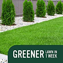 Greener lawn in 1 week