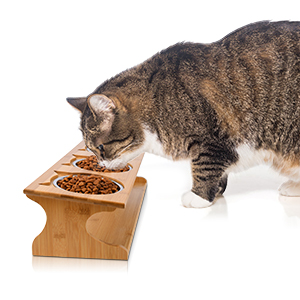 cat bowls elevated stainless steel