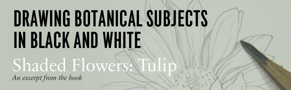 Drawing, botanical, black, white, graphite, shaded, flowers, tulip