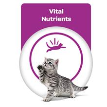Vital Nutrients