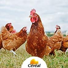 galline, uova all'aria aperta, ingredienti naturali, dalla natura, prodotti senza lievito