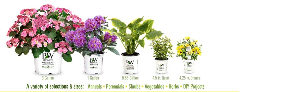 Over 30 acres of Greenhouses Online