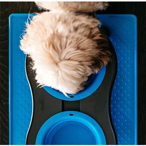 dog, dog feeder, cat feeder, elevated feeder, slow feeder, dog food, cat food, RV, travel
