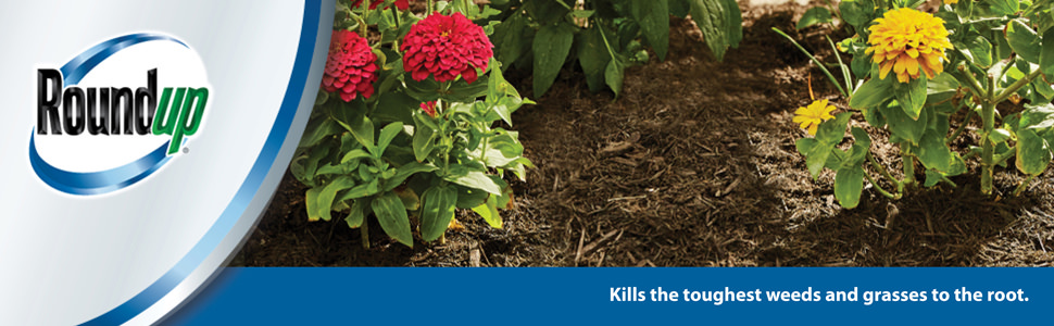 Roundup kills the toughest weeds and grasses to the root.