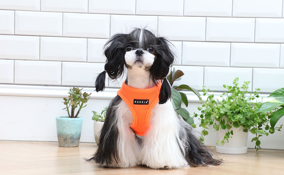 Puppia harness for dogs