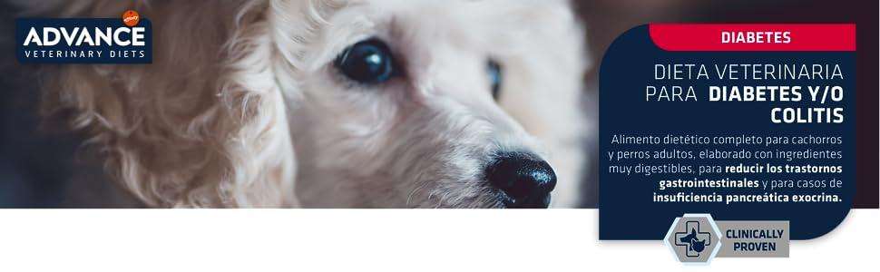 insuficiencia pancreatica en perros sintomas de diabetes