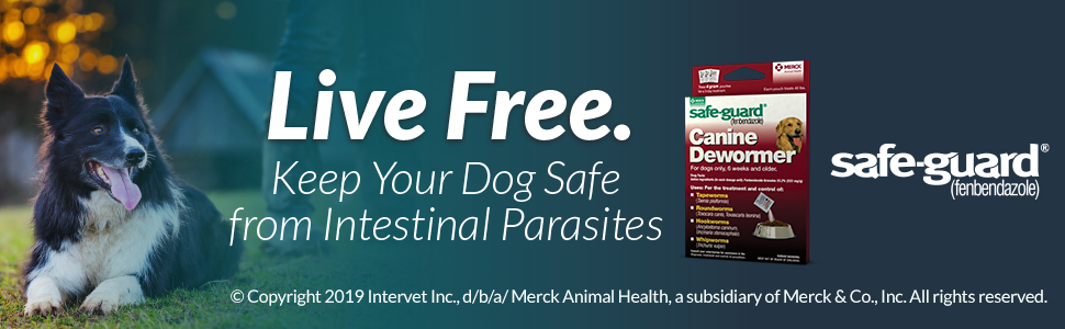 Safe-Guard Canine