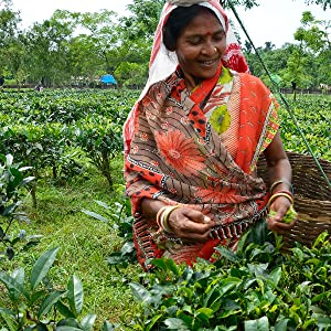organic fair trade assam black tea numi earl grey golden chai breakfast together for h2ope india