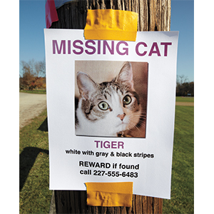 lost, flyer, pet, cat