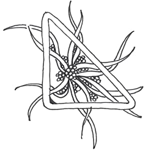 czt, dingbatz, dingbats project, zentangle, tangle design, doodling, drawing, meditation, patterns