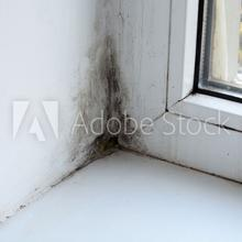 Do you have mold in your home?