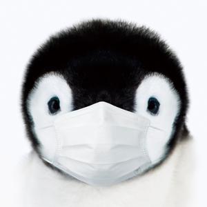 ペンギンのパッケージが目印です。