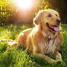 senior dog food formulas support healthy immune systems