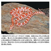 REPFAN レプファン コンスネーク 蛇 モルフ 爬虫類 笠倉出版社