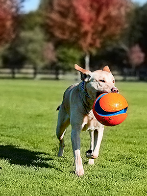 dog toys for large dogs, dog toys for small dogs, dog toys for boredom, dog toy basket,