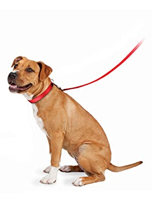 Dog, pet, dog collars, dog harness, pet supplies, dog, dog leash, leash, leashes, cat