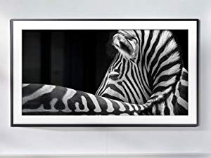 The Frame with a photo of a zebra displaying