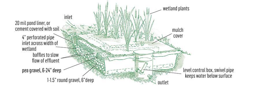 wetland; garden; permaculture