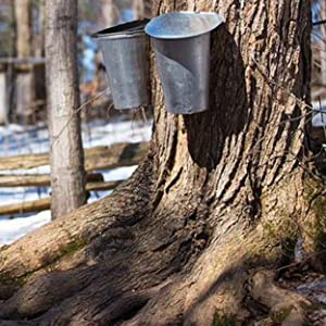 certified organic farming maple syrup humanitarian protect health consumers planet agriculture