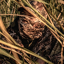 waterfowl hunting, duck hunting, shadow grass blades, max 5