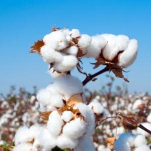 coton molleton naturel bio
