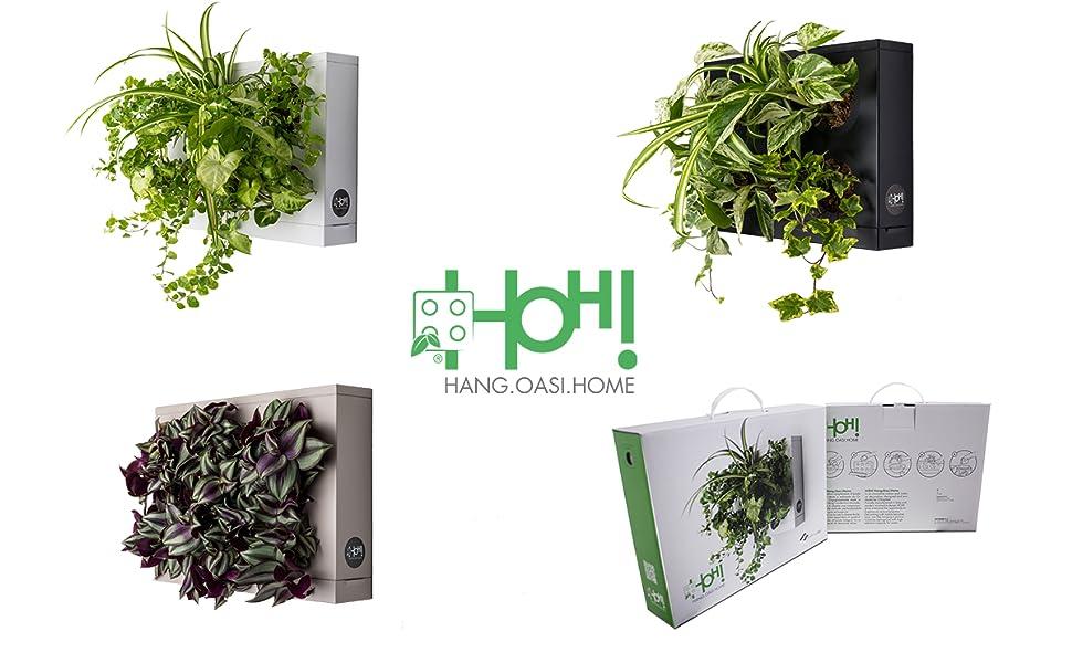 Ortisgreen HOH! de, Tableau Végétal Mural, Pot pour Plantes Mural a  Suspendre, Support Mural pour Plantes, Décoration Murale, Couleur Blanc, ...