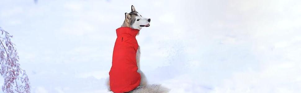 Regenmantel für Winterhund