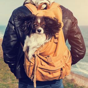 Canneberges-urinaire vessie et les reins-support-pour-chiens