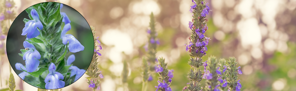 zoom fleur