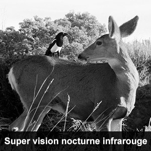 camera de surveillance de chasse