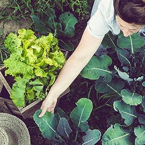Feed. Smartfood légumes jardin