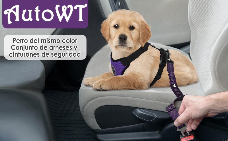 Accod 2 m de Largo Correa de Entrenamiento para Mascotas//Perro