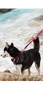 ComfortPro Dog Collar Lead Set