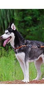 ComfortPro Dog Collar Leash Set